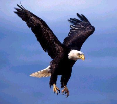 Eagles' Inspiration